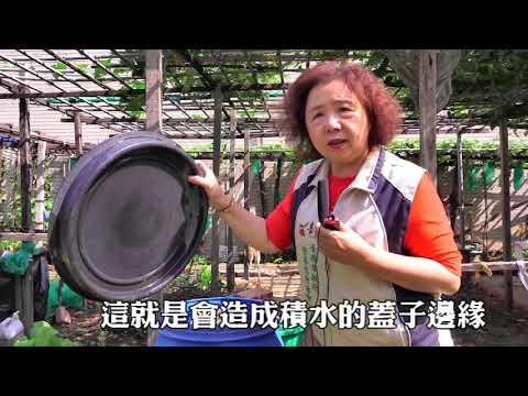 臺南市政府登革熱防治中心 高風險菜園記者會