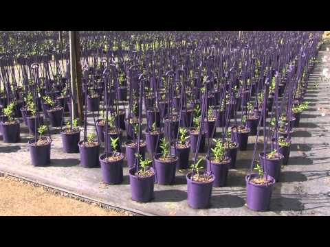 Production Nursery Work Flow Efficiency