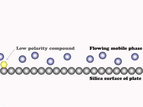 Chromatographic Separation Explained
