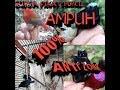 Mp3 suara pikat burcil ampuh |kutilang ribut _ petualang chanel