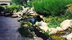 Awesome Pool to Pond Conversion in Paradise Valley AZ