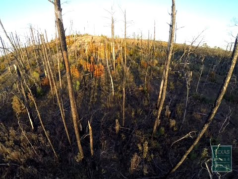The Benefits Of Prescribed Fire - Tips From A Wildlife Biologist