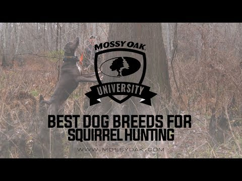 Best Dog Breed For Squirrel Hunting