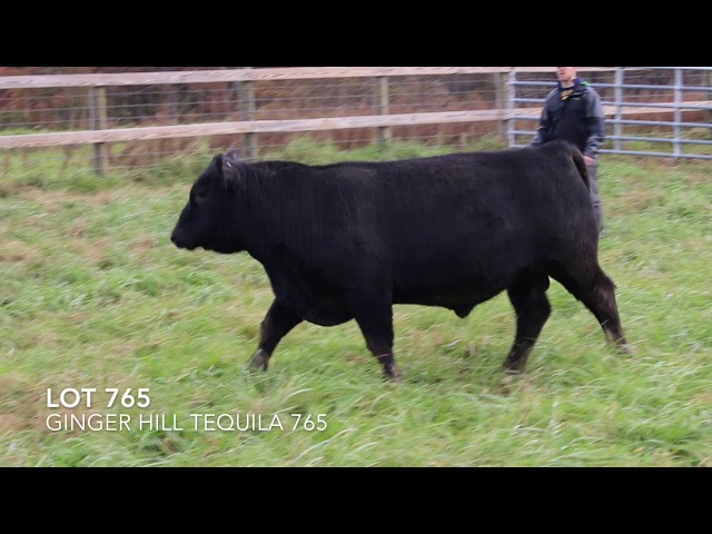 Ginger Hill Angus Lot 765