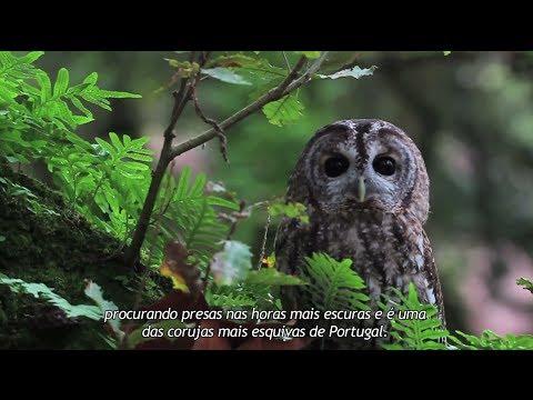 Documentário - Portugal Terra - A Natureza em Portugal HD