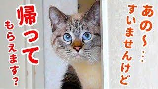 """この人…誰?人見知りしない猫もビビって隠れちゃった""""例のあの人""""との初対面動画 thumbnail"""