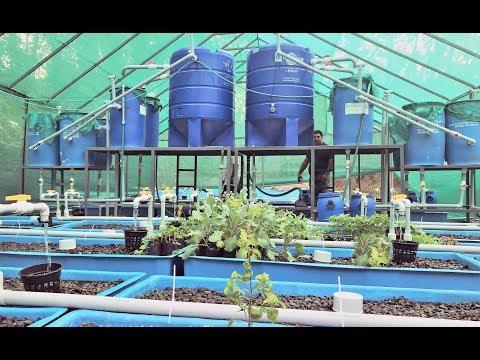 ഒരു പ്രവാസിയുടെ 16 ലക്ഷത്തിന്റെ മത്സ്യ കുളം ; HI TEK FISH FARM IN KOTTAYAM DISTRICT