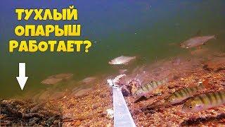 Реакция рыбы на тухлого опарыша / Подводные съемки рыбалка онлайн