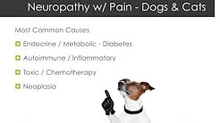 Causes of Neuropathy and Neuropathic Pain in Dogs & Cats