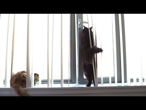 お花見をするねこたち Theo, Thea and Tiara watching birds