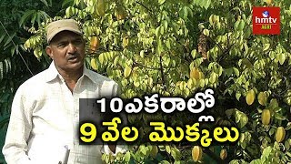 High Density Planting Techniques | Sandal Wood | Herbal Plants | hmtv Agri