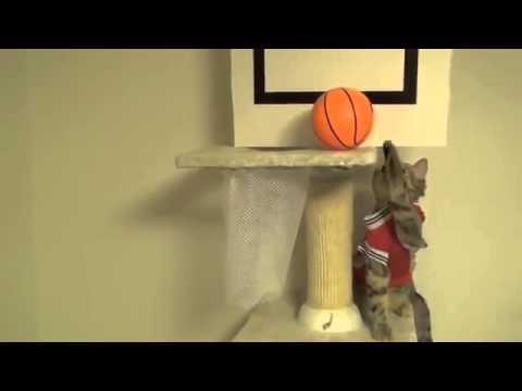 Смотреть как играют коты
