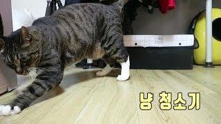바닥에 뭔가 묻었을때 고양이의 행동 ㅋㅋㅋㅋㅋ
