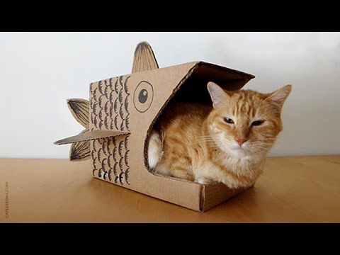How to Make a Cardboard Fish for your Cat