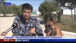 Кинологи Казахстана стали лучшими на международных соревнованиях в Баку