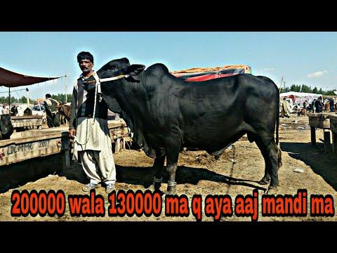 Caw Mandi Pakistan Ma Rate  Km Q Ha Aaj 250k Wala 150k Ma Q Ha Nukra Wacha Hsn Entertainment