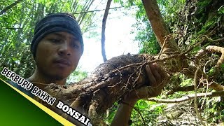 Video BERBURU BAHAN BONSAI DI ALAM LIAR _BAHAN BUNGA LANTANA download MP3, 3GP, MP4, WEBM, AVI, FLV Juni 2018