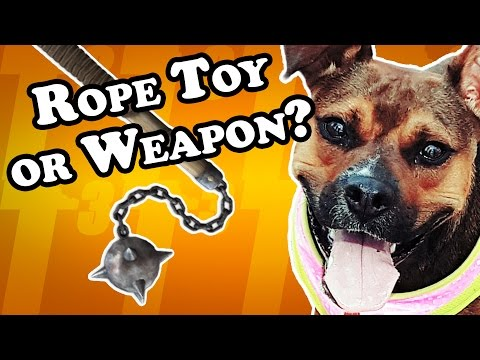 how-dangerous-is-this-rope-toy?---dog-toy-reviews-|-cotton-rope-with-bones