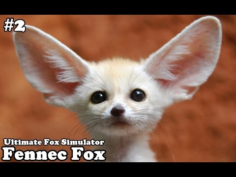 Ultimate Fox Simulator - Fennec Fox (baby foxes) Level 100 - Android/iOS - Gameplay Part 2
