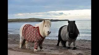 Пони - маленькие лошадки