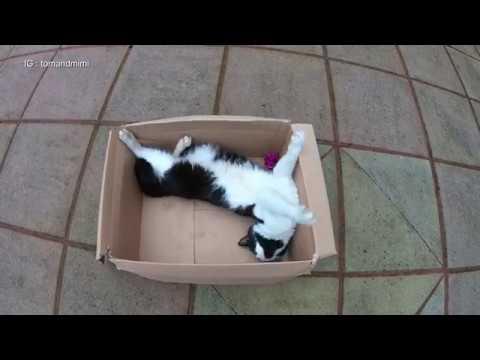 Cat Playing In A Box : 4K Ultra Hd 2160p Video