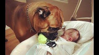 『これからよろしくね!』と人間の弟に宝物をあげる犬! 【ほっこりする...