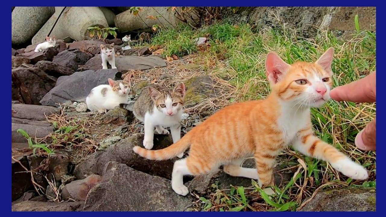 防波堤の子猫兄弟の中で茶トラだけが勇気だしてコッチにやってきた
