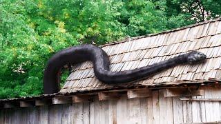 Anacondas 3+4 (2009) Film Explained in Hindi / Urdu   Anaconda Giant Full Summarized हिन्दी