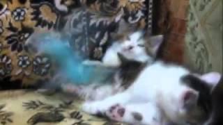 Приколы с кошками. Попугай и котята.