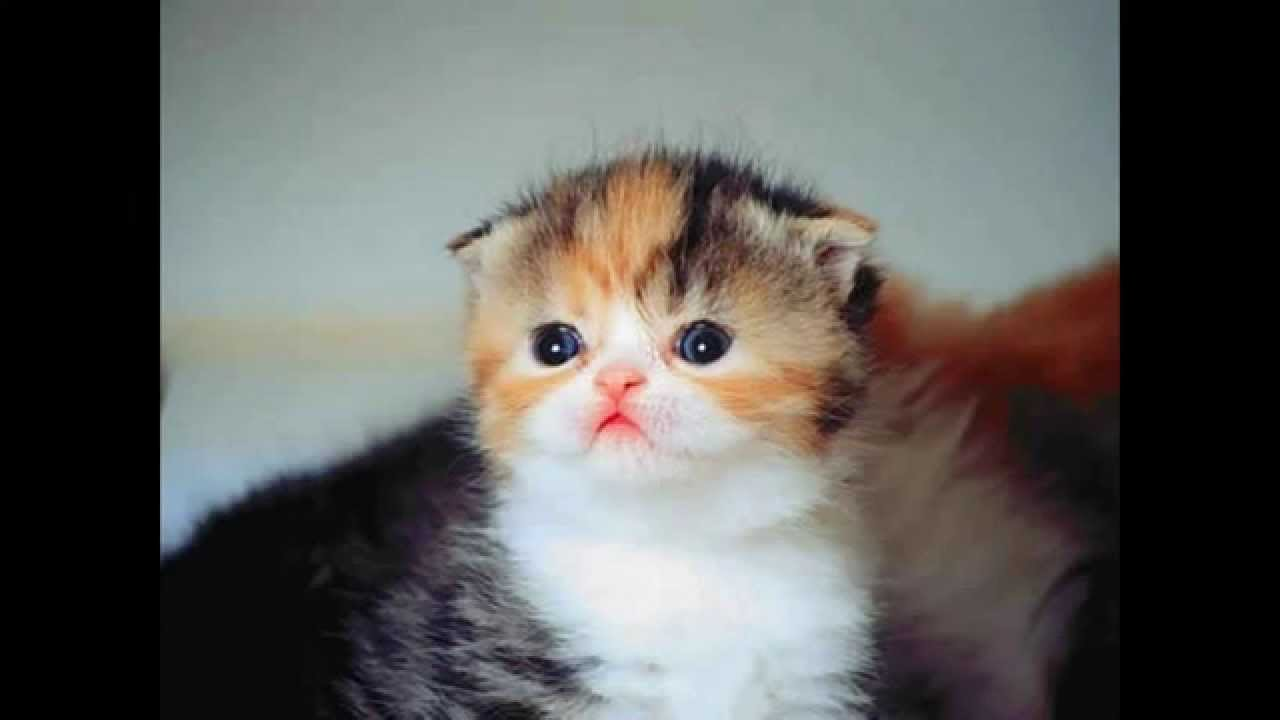 Cara Menghilangkan Kutu Pada Kucing 085600000624 Secara Alami Youtube