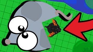 Черный Дракон ВНУТРИ МЫШКИ в Mope.io