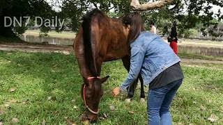 A Girl And A Horse How To Teach Your Horse Lay Down Horse Training By A Girl