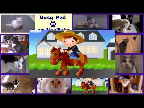 Cats Meowing YANKEE DOODLE, Classic Kid's Song (A Cappella)