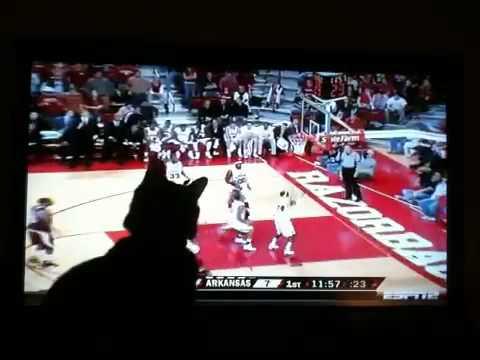 Cairo Watching basketball