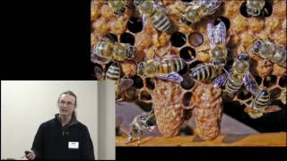 Local Honey Bee Strains and Feral Swarms with Leo Sharashkin