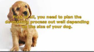 Effective Pointers In Fixing Your Dog's Fur Matts