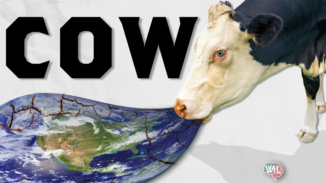Are Cows really Bad for the Planet? Why did we start blaming them?