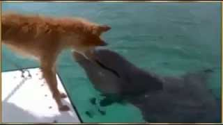 Animal World   Dolphins save dog from shark