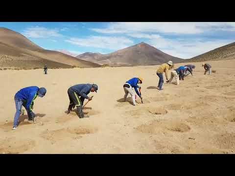 Planting Quinoa On Bolivia's Altiplano