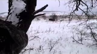 Загонная охота на кабана