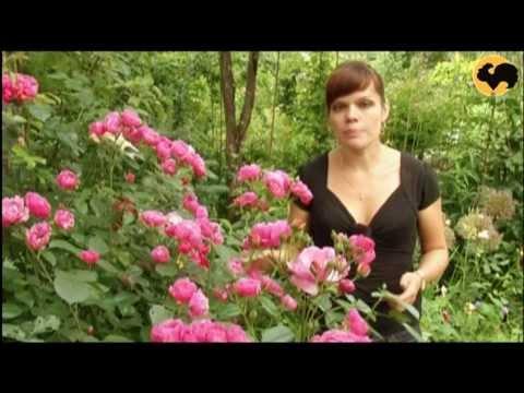 Розовые Розы ! Серия 27 \pink Roses