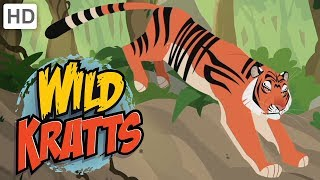 Wild Kratts - Explore India! | Kids Videos