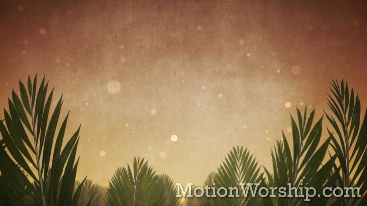 Palm Sunday Epic Branches HD Looping Background By Motion Worship