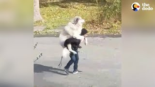 Dog Decides When His Walk Is Over | The Dodo