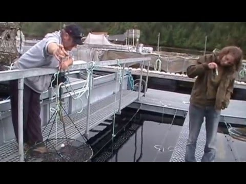 Kyuquot Multi Trophic Aquaculture System Tour 1