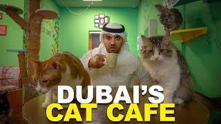 DUBAI'S CAT CAFE