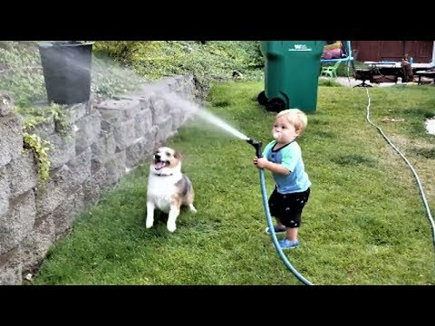 Funny Baby and Dog playing with water hose | Cute Dog loves Baby