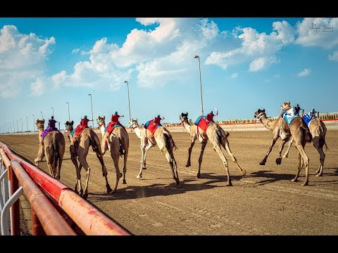 Al Wathba Camel Race - Abu Dhabi