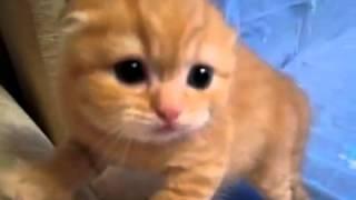 Опасный котенок