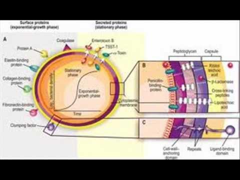 VIRULENCE TOXINS , HEALTH EDUCATION , INFECTION CONTROL (ICSP) , URDU / HINDI